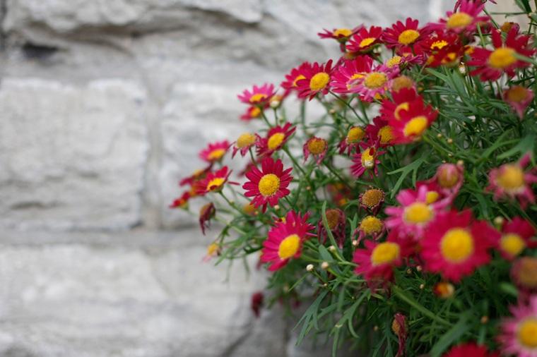 Botanical6